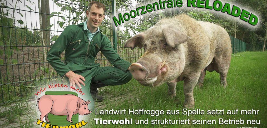Dokumentation über Schweinehaltung mit mehr Tierwohl auf dem Hof Hoffrogge Moorzentrale in Spelle, Emsland, Niedersachsen, Sauenhaltung, Abferkeln,